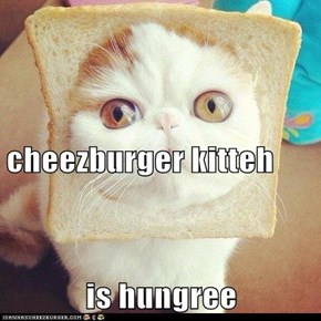 cheezburger kitteh is hungree