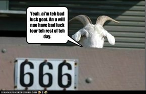 Bad luck goat strikes again