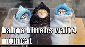 babee kittehs wait 4 momcat