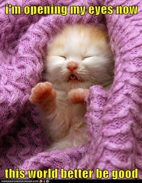 Lolcats: i'm opening my eyes now