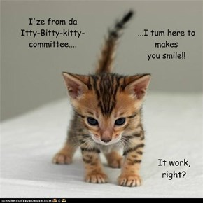 I'ze from daItty-Bitty-kitty-committee....