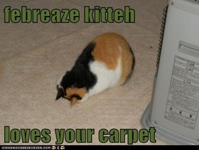 febreaze kitteh   loves your carpet