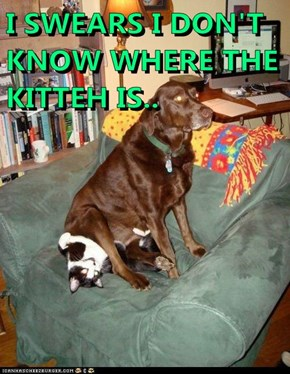 I SWEARS I DON'T KNOW WHERE THE KITTEH IS..