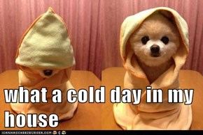 what a cold day in my house
