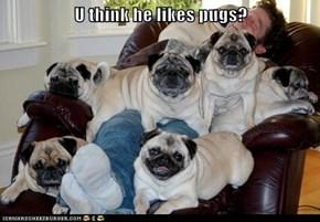 U think he likes pugs?