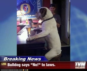 "Breaking News - Bulldog says ""No!"" to laws."