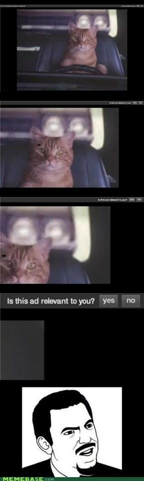 Am I a Cat?!