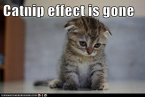 Catnip effect is gone