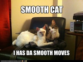 Lolcats: SMOOTH CAT