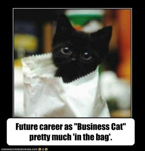 """Future career as """"Business Cat"""" pretty much 'in the bag'."""
