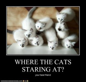 WHERE THE CATS STARING AT?