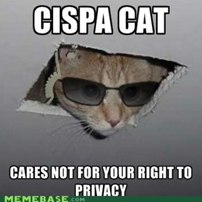 CISPA Cat: The Basement Cat of the Supposed Ceiling