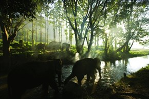 Elephant Forest, Thailand