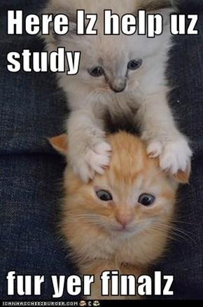 Here Iz help uz study   fur yer finalz