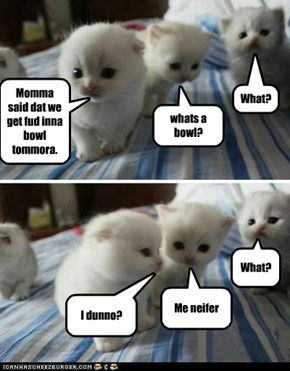 Lolcats: What?