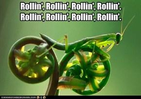 Rollin', Rollin', Rollin', Rollin'.Rollin', Rollin', Rollin', Rollin'.