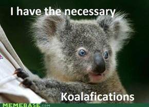 1) Be a Koala