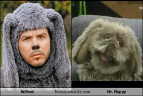 Wilfred Totally Looks Like Mr. Floppy