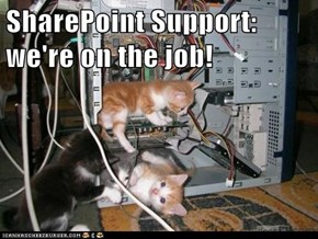 SharePoint Support: we're on the job!