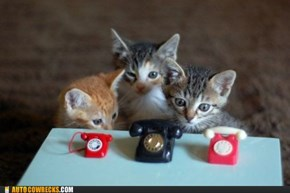 Silly Cats, You Can't Use Telephones!