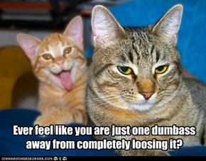 Lolcats: One Dumbazh Away...