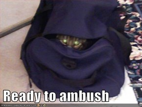 Ready to ambush