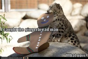 I caught the gingerbread man What now?