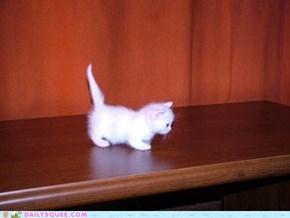 Tiny Kitten Is Tiny