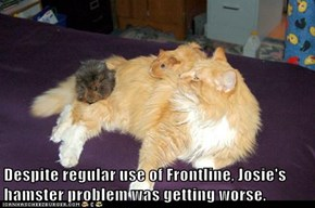 Despite regular use of Frontline, Josie's hamster problem was getting worse.