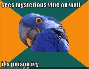 sees mysterious vine on wall  it's poison ivy