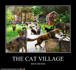 THE CAT VILLAGE