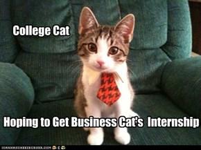 College Cat