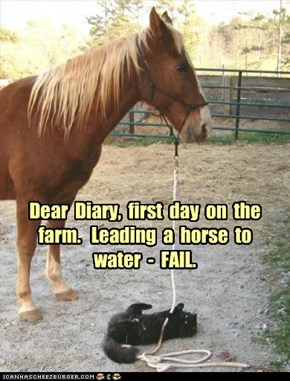 Dear  Diary,  first  day  on  the farm.
