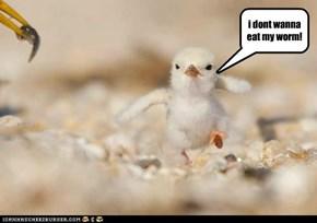 I'm Putting My Talons Down!