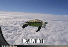 Yeah, I'm Flying