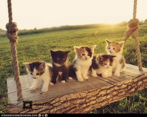 Cyoot Kittehs of teh Day: Swingers