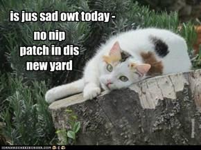 no nip patch in dis new yard