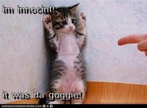 im innocint!  it was da goggie!