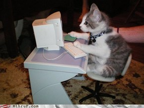 U Haz Just Reseeved a Phishing Email