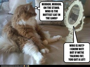 MIRROR, MIRROR, ON THE STAND.WHO IS THE HOTTEST CAT IN THE LAND?