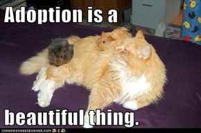 Adoption is a  beautiful thing.