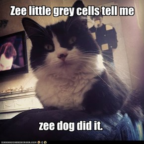 Detective Cat solves zee mystery.