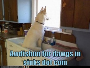 Awdishun fur dawgs in sinks dot com