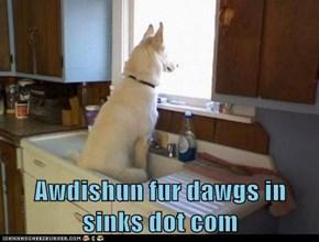 Awdishun fur dawgs in sinks dot com