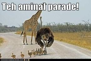 Teh aminal parade!