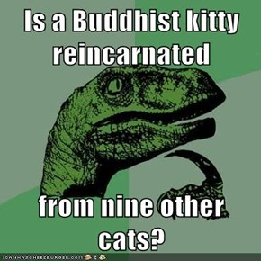 Is a Buddhist kitty reincarnated  from nine other cats?
