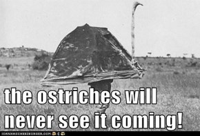 the ostriches will never see it coming!