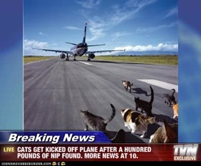 Breaking News - CATS GET KICKED OFF PLANE AFTER A HUNDRED POUNDS OF NIP FOUND. MORE NEWS AT 10.