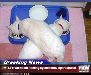 Breaking News - Bi-leval kitteh feeding system now operashunal