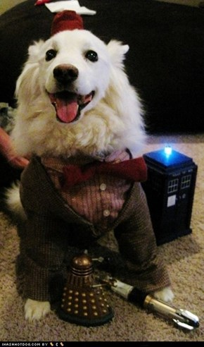 I Has A Hotdog: Doctor Who?